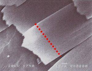 はねを電子顕微鏡で拡大
