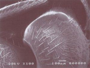 ミクロの世界 蟻の拡大