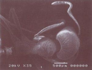 ミクロの世界 蟻(頭部)