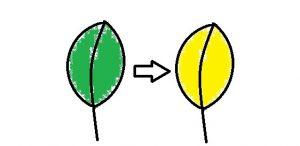葉っぱの色の変化1