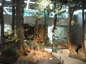 自然の科学 ブナ林