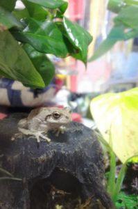石の上に乗るカエルちゃん