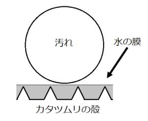 カタツムリの卵の構造