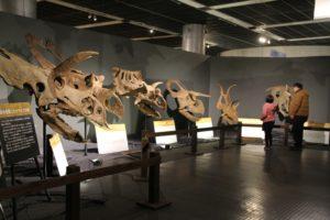 角竜類 頭部