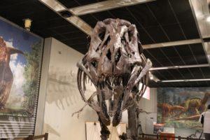 ティラノサウルス 真ん前撮影