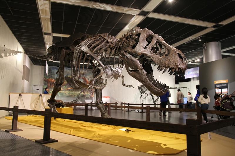 ティラノサウルス(愛称ワイレックス)