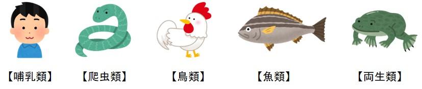 哺乳類、爬虫類、鳥類、魚類、両生類 のイラスト